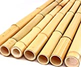1x Bambusrohr gelb, Moso Bambus Gebleicht, Durch. 3,5-5cm, Länge 200cm - Moso Bambusrohr...