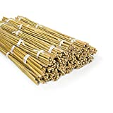 Bambusstäbe Bahia - Tonkinstäbe - Bambusrohre - Indoor & Outdoor verwendbar - Bambusstab...