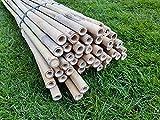 WoodBi Tonkinstäbe Bambusstäbe Bambusrohr - Kletterhilfe für Pflanzen - Rankhilfe...